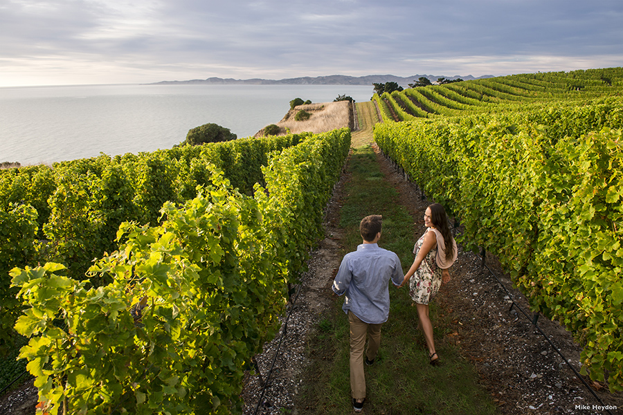 A winery in Marlborough, one of the top honeymoon destinations in New Zealand