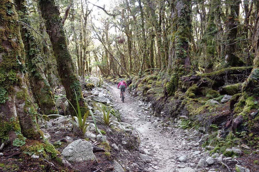 Heli bike Nelson New Zealand adventure tours